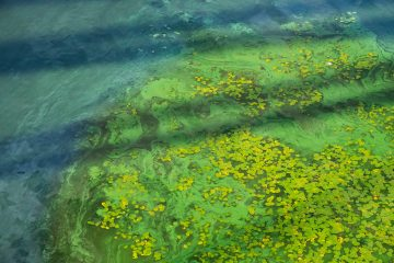Dirty water in the river. River water pollution. Ecological concept of polluted nature.